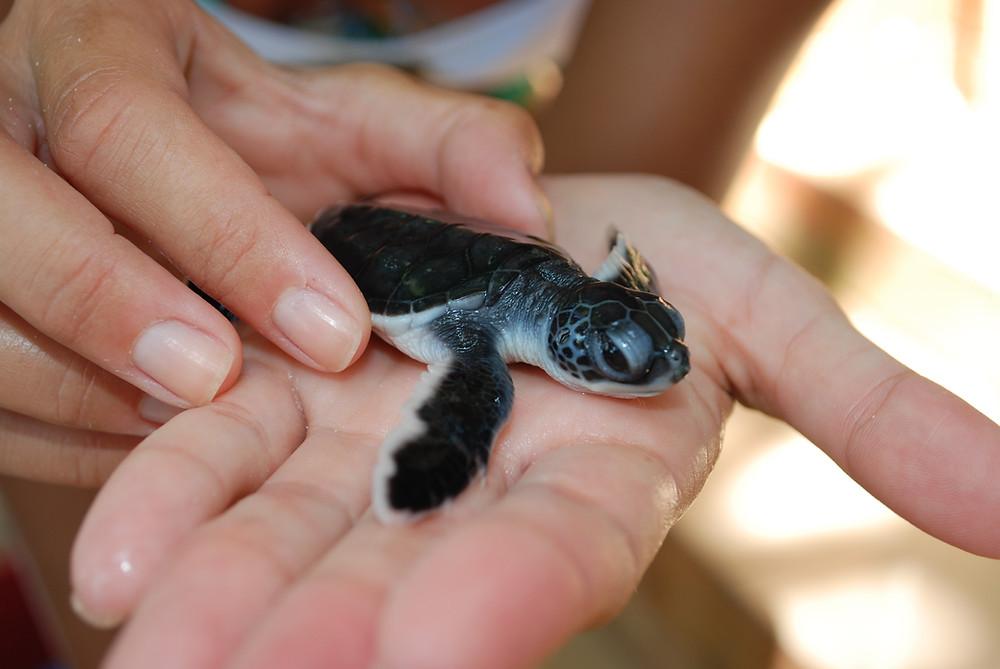 Turtle Beach, Pulau Besar, Isole Perhentian Malaysia