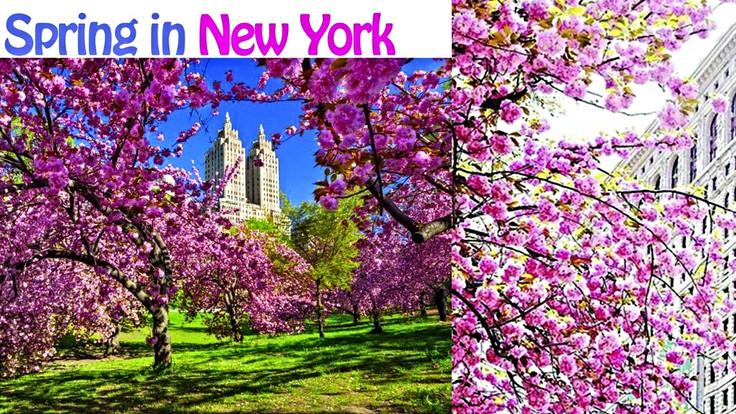 NEW YORK. Un amore fuori dal comune