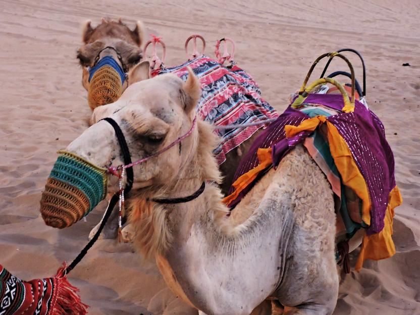 DESERT SAFARI. Una corsa tra le dune di sabbia nel deserto di Dubai