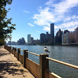 Walking on the island #inviaggioconapple #newyorkcity #newyork #nyc #esplanade #love #eastriver #sky