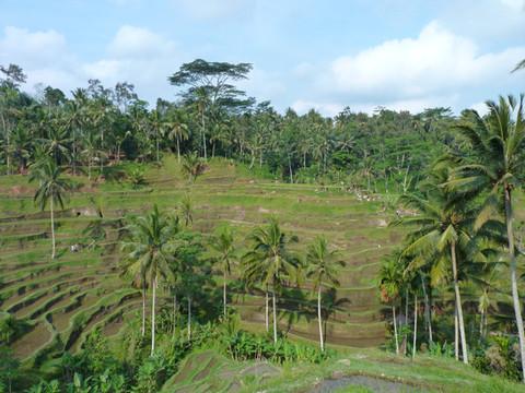 INDONESIA. Natura, colori e tradizioni di Ubud, il cuore pulsante di Bali