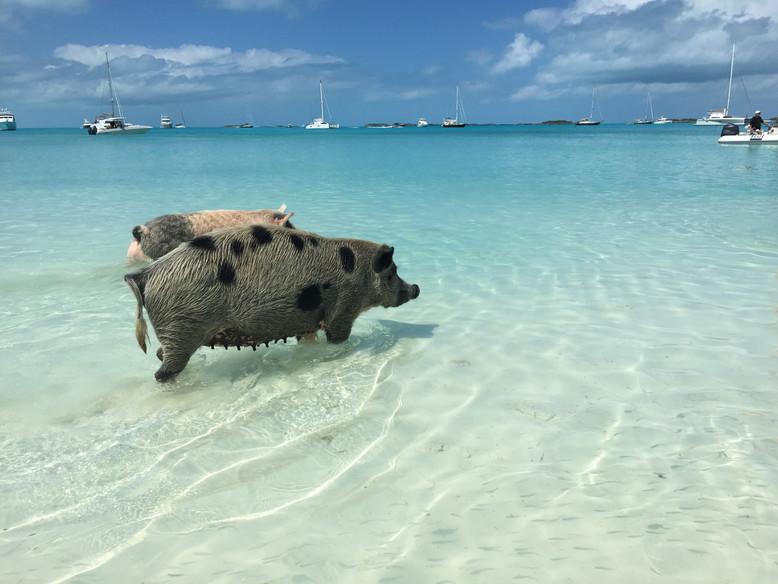BAHAMAS. Tra maialini, squali e iguane: un giorno in barca alla scoperta di Exuma