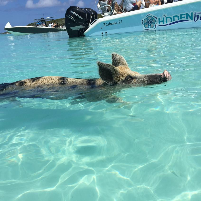 Exuma, Bahamas, Pig Beach