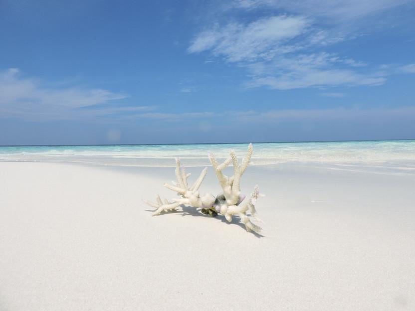 MALDIVE. In crociera tra gli atolli di South Male e Felidhoo
