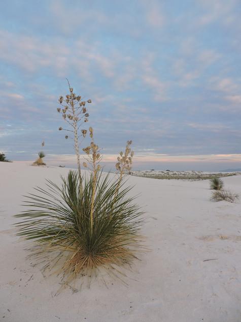NEW MEXICO. White Sands, il deserto bianco degli Stati Uniti