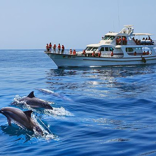 Whale & Dophin Watching