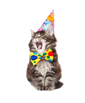 cat-birthday-hat-open-mouth-260nw-396946