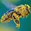 Thumbnail: Organic Spanish Bee Pollen