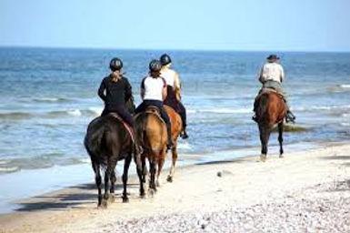 paardrijden strand.jpg