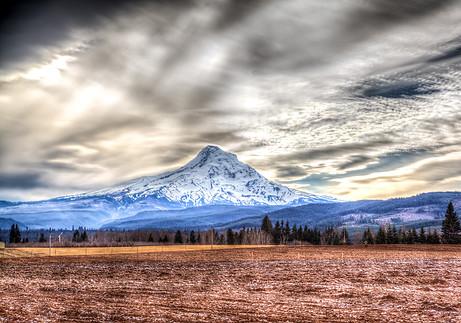 Mt Hood Field - Oregon