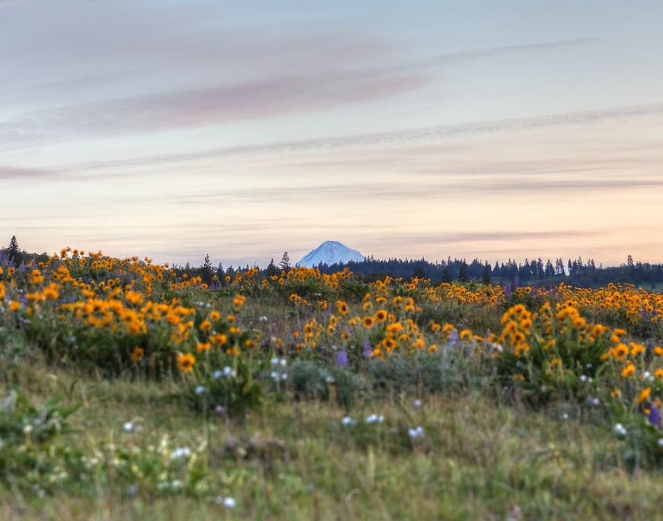 Mt Hood Tip and Flower Field