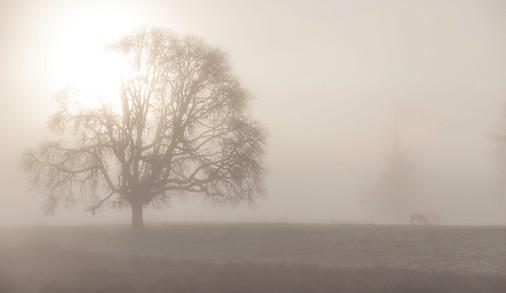 Foggy Tree and Horse - Oregon
