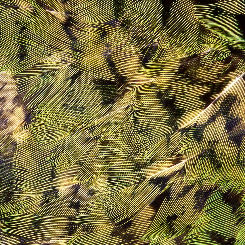 Kakapo High Resolution Paddy Ryan