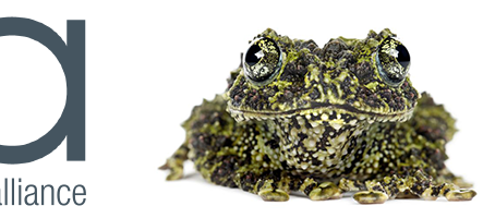 We are proud to announce our partnership with the Amphibian Survival Alliance (ASA)