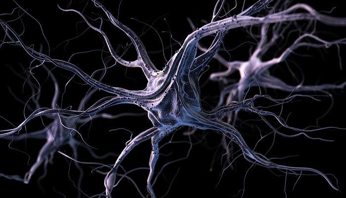 neurones-PWD2KAT.jpg