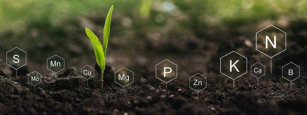 fertilization-role-nutrients-plant-life-