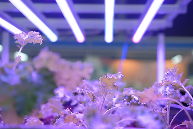 plant-growing-smart-indoor-farm-with-art