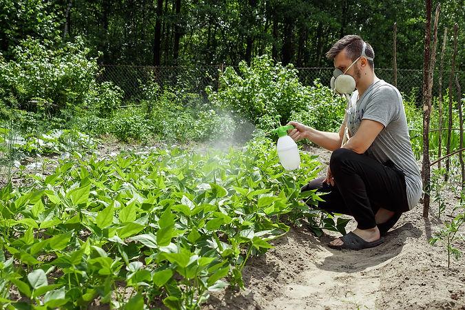 man-respirator-sprinkles-plants.jpg