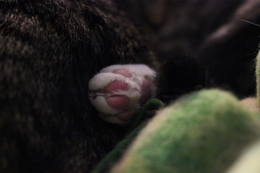 Miller's foot