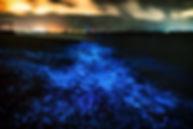 Vaadhoo Island, The Maldives, Indian Ocean, sea, bioluminescent, nature, travel