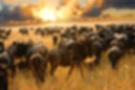 The Great Wildebeest Migration, Serengeti, Tanzania, Masai Mara, Kenya, Africa, animals, nature, travel