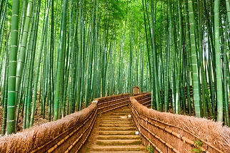 Sagano Bamboo Forest, Japan, Asia, Trees, Path