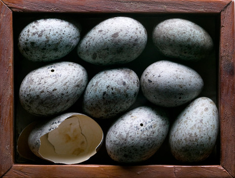 eggs from biology specimens collection
