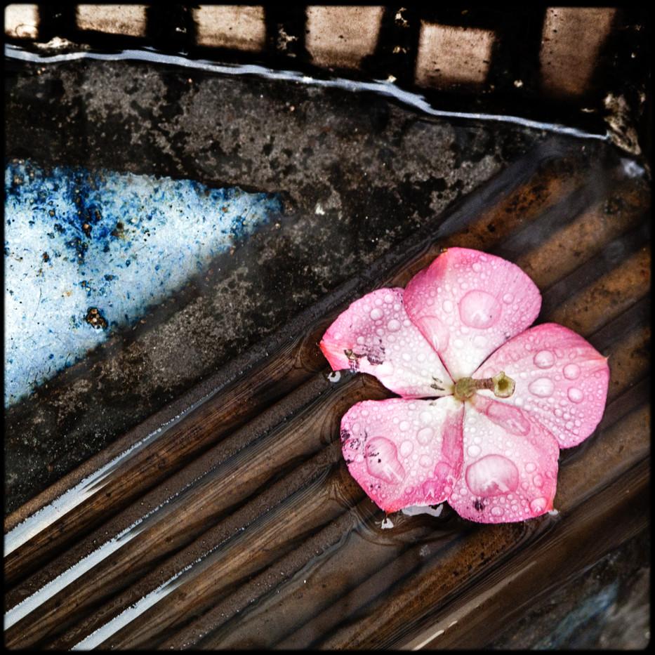 026- flower.jpg