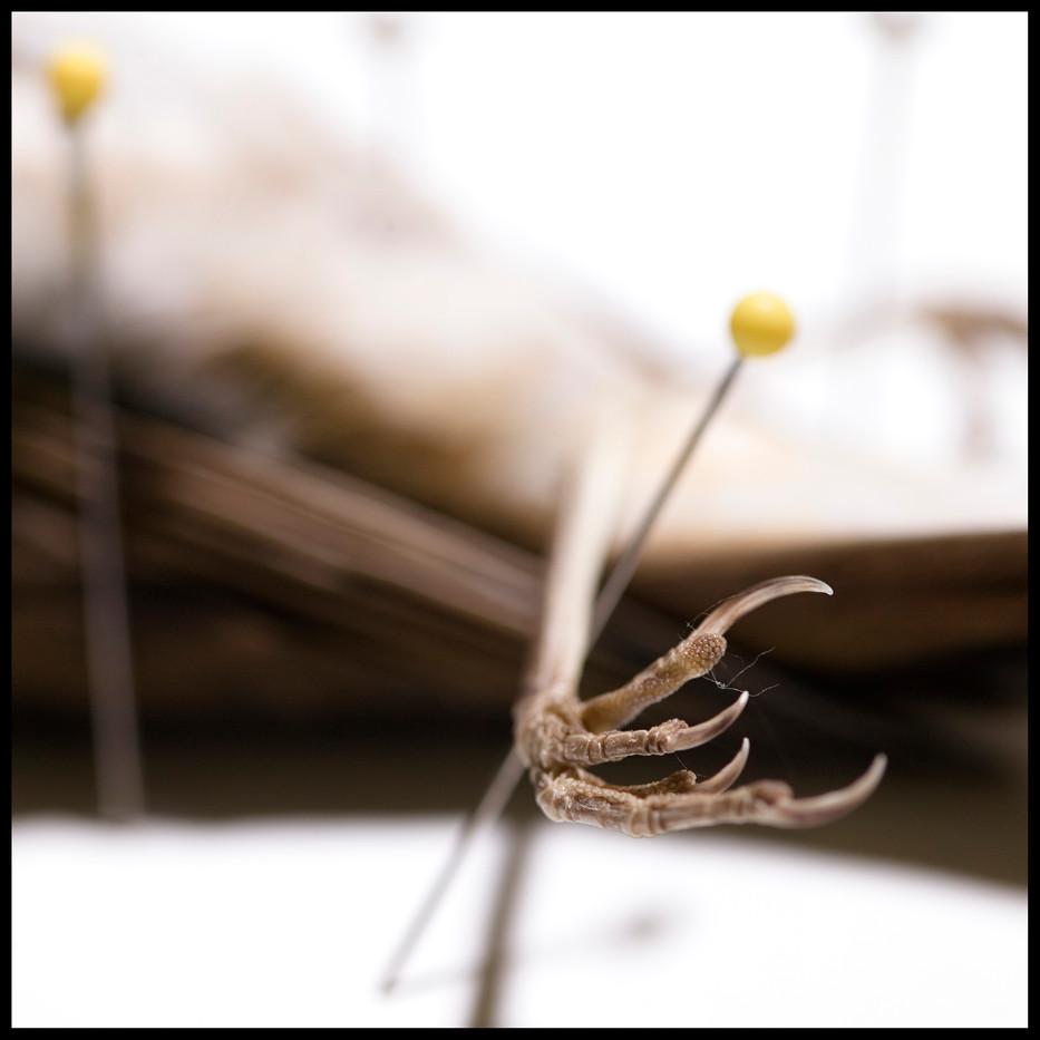 Specimens -04.jpg