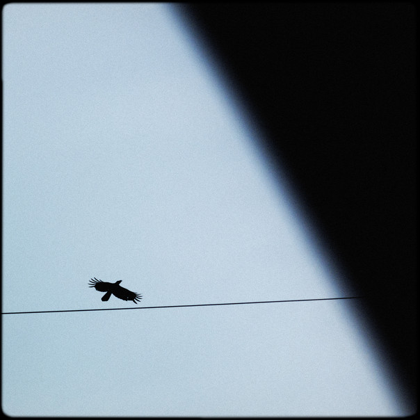 042- flying bird.jpg