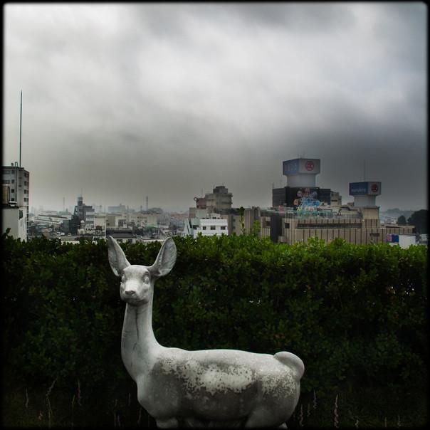 005- deer.jpg