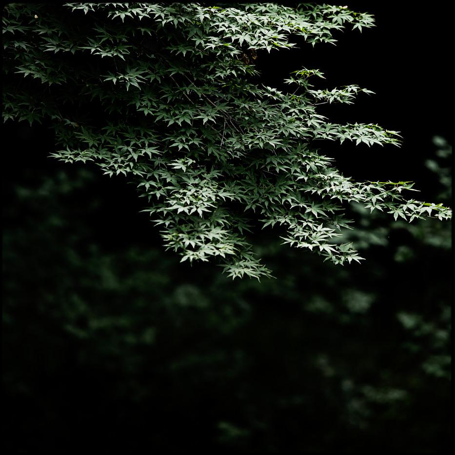 004- leaves.jpg