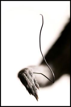 Specimens -20.jpg