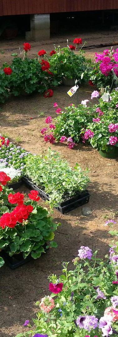 Annual Plant Sale 2018