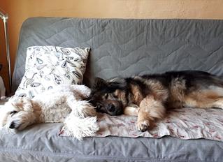 Darf mein Hund auf die Couch?