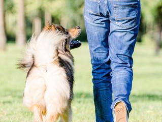 Der Weg (zum gut erzogenen Hund) ist das Ziel