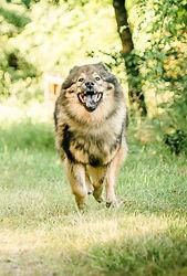 Einzeltraining Hundeschule Canicula Hunsrück