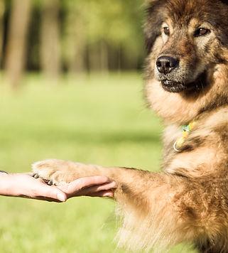 Kundenfeedbacks Hundeschule Canicula Hunsrück