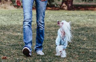 Natalie+Hunde-28.jpg