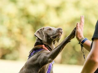 Was steht im Tierschutzgesetz über das Training von Tieren?