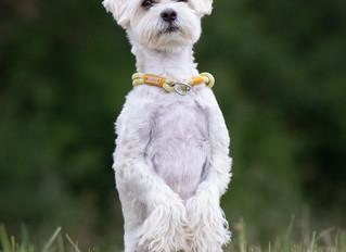 Jeder - alle - immer … sind alle Hunde und ihre Menschen gleich?