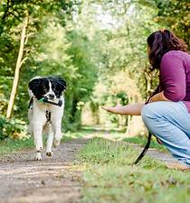 Apportieren Hundeschule Canicula Hunsrück