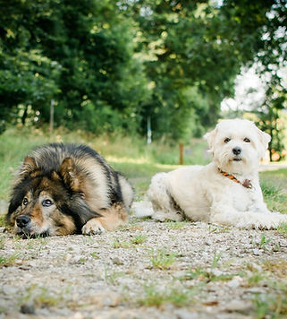 Meine-Hunde-2.jpg