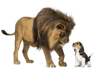Der Hund stammt vom Löwen ab!