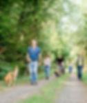 Social walks Hundeschule Canicula Hunsrück