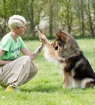 Arbeitsweise Hundeschule Canicula Hunsrück