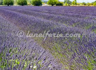 La Provence en couleur