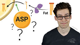 ASP enhances in situ lipoprotein lipase activity by increasing fatty acid trapping in adipocytes