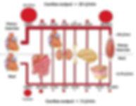 cardiac output.jpg