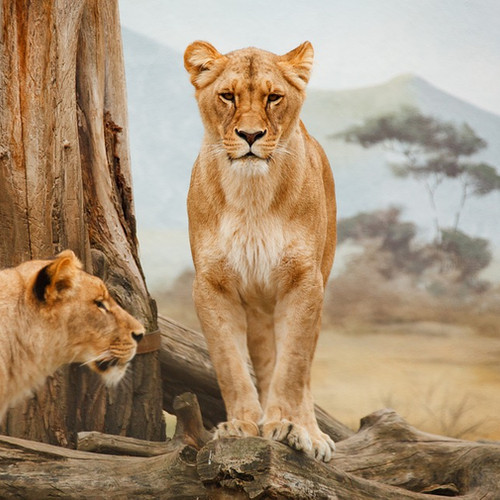 KENYA & TANZANIA SIGNATURE SAFARI